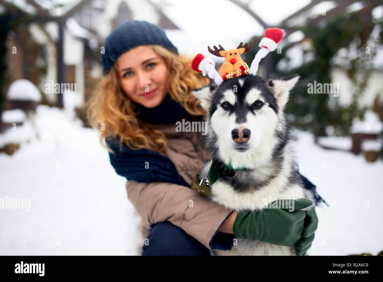 Atractiva mujer caucásica auténtico abrazos gracioso malamute perro vistiendo santa queridos astas de navidad. Rizado mujer sonriente divirtiéndose con cachorro huskie en año nuevo. El Pet es el mejor regalo para las vacaciones. Foto de stock