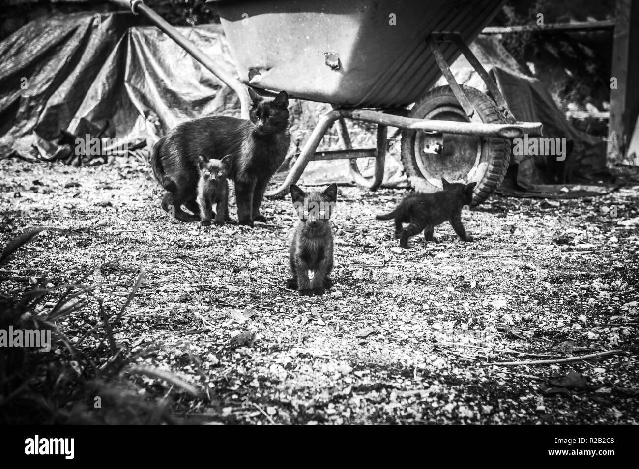 Los gatitos disfruta jugando en la granja. Foto de stock