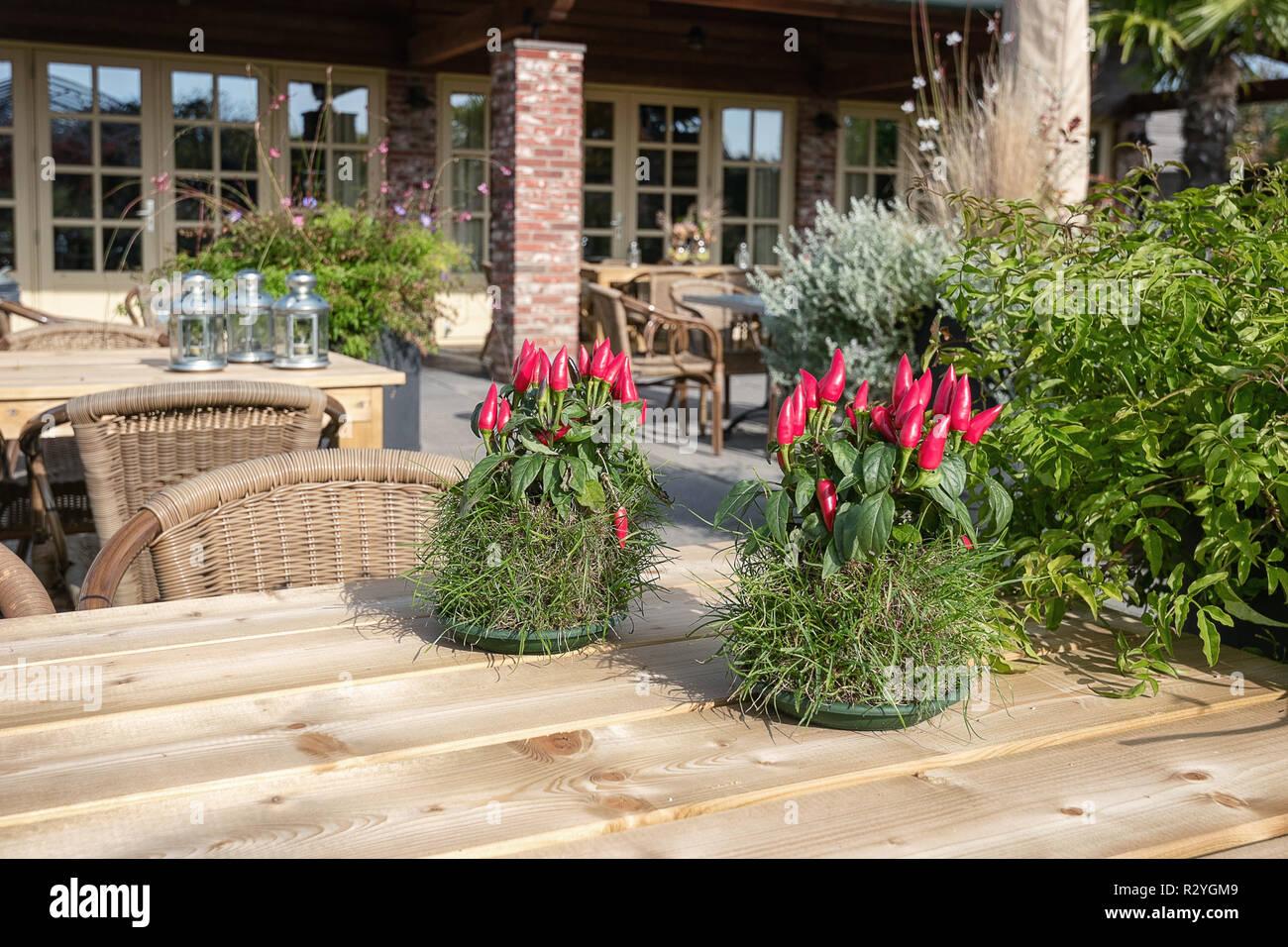 Las Mesas Decoradas Con Plantas De Pimiento Rojo Y Los