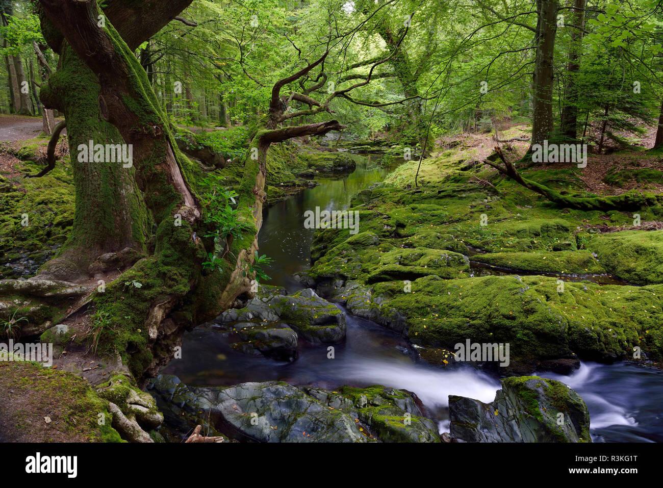 Irlanda, Ulster, Condado de Down, Tollymore Park, uno de los Juego de Tronos lugares de rodaje Foto de stock