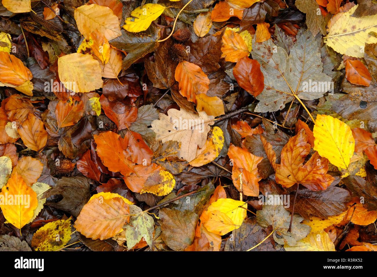 Alfombra de hojas caídas en otoño Fotografía de stock Alamy