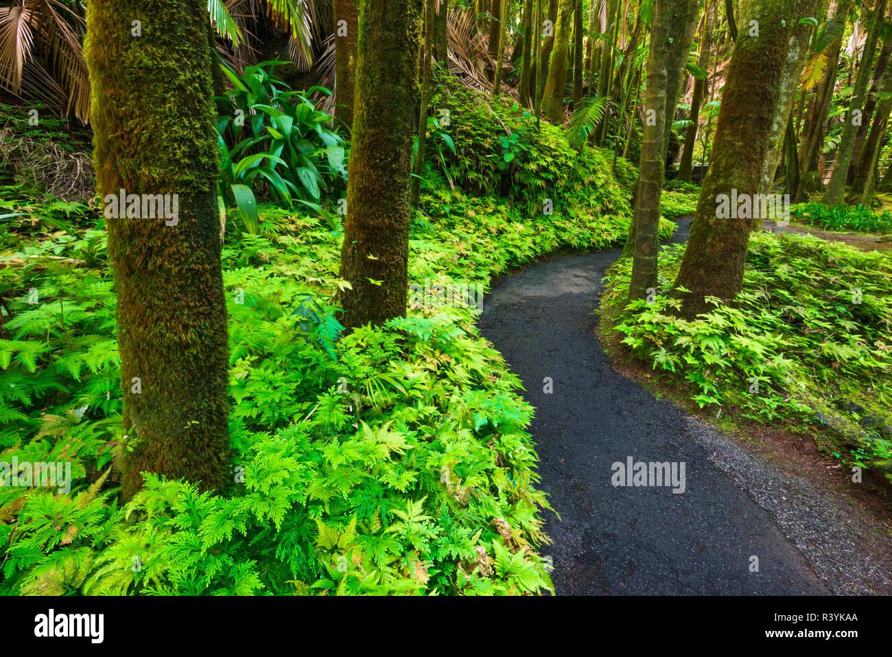 Palm Jungle Trail en Hawai jardín botánico tropical, Costa Hamakua, Big Island, Hawaii, EE.UU. Foto de stock
