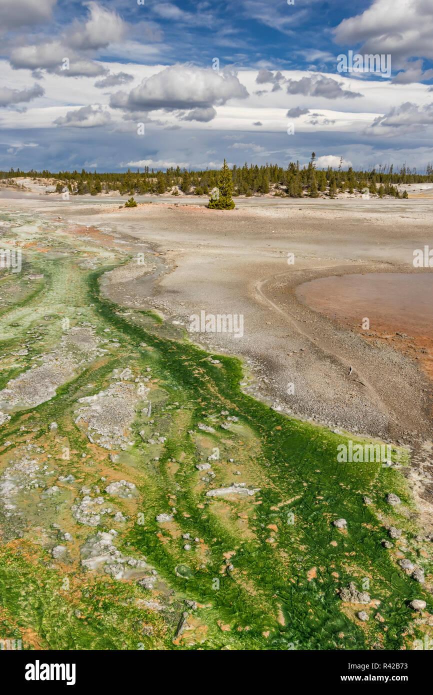 Colorido microorganismos termófilos en un géiser cuenca, el Parque Nacional de Yellowstone. Foto de stock