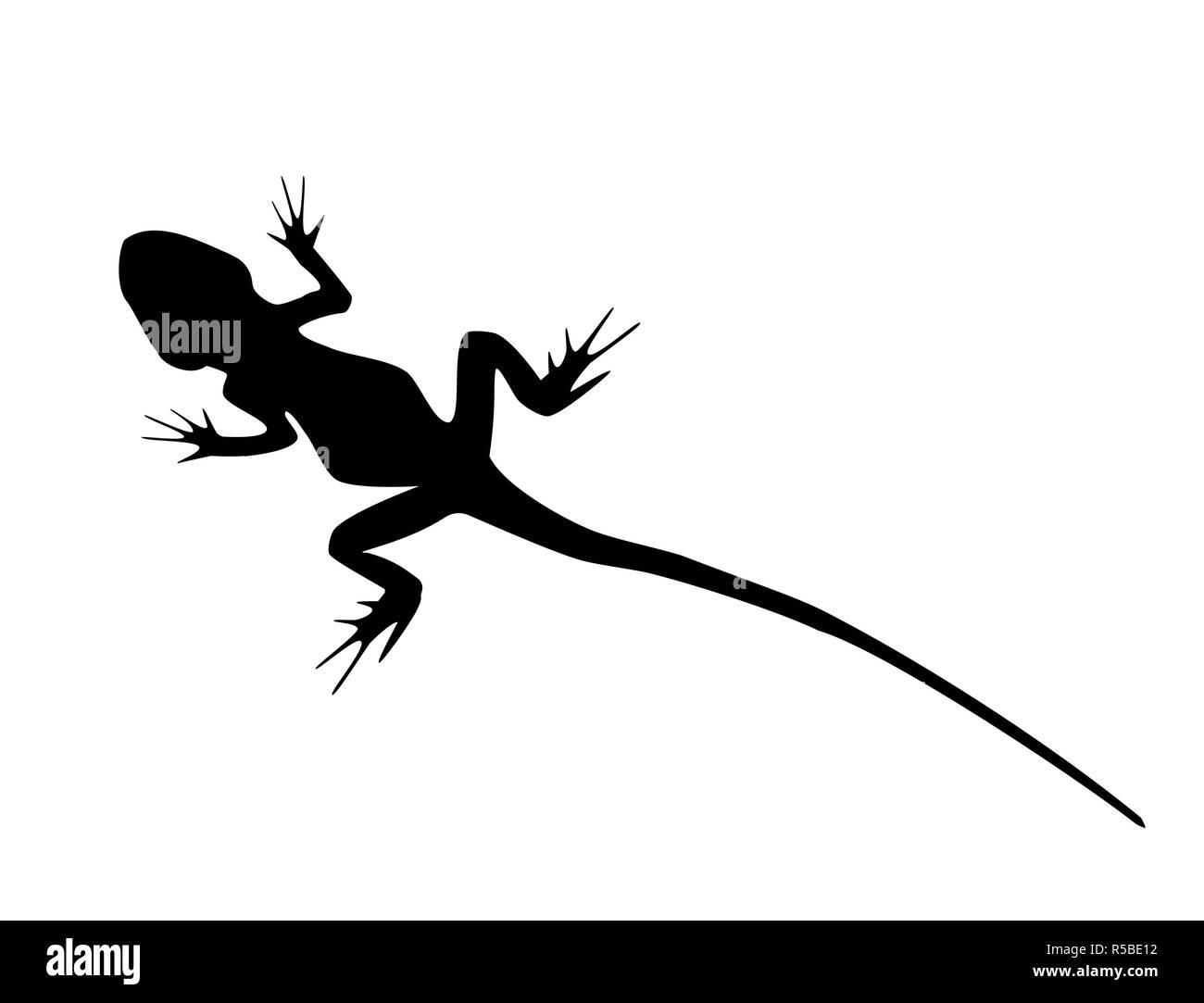 El lagarto de cola larga silueta negra animales salvajes aislado sobre fondo blanco. Esquema simple dibujado reptil, logotipo Ícono ilustración Imagen De Stock