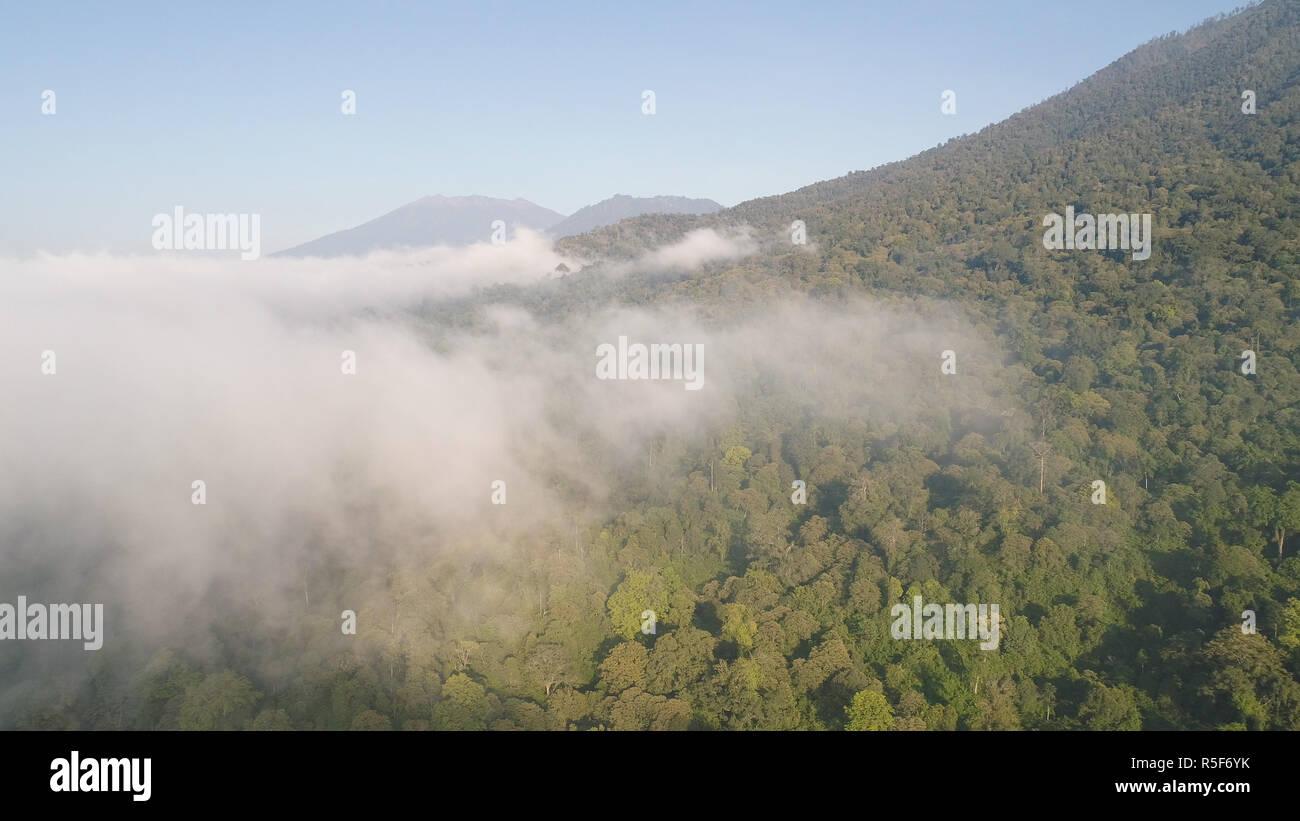Vista aérea de la selva tropical cubierto de nubes con exuberante vegetación y montañas de la isla de Java. El paisaje tropical, la selva tropical en la zona montañosa de Indonesia. verde, exuberante vegetación. Foto de stock