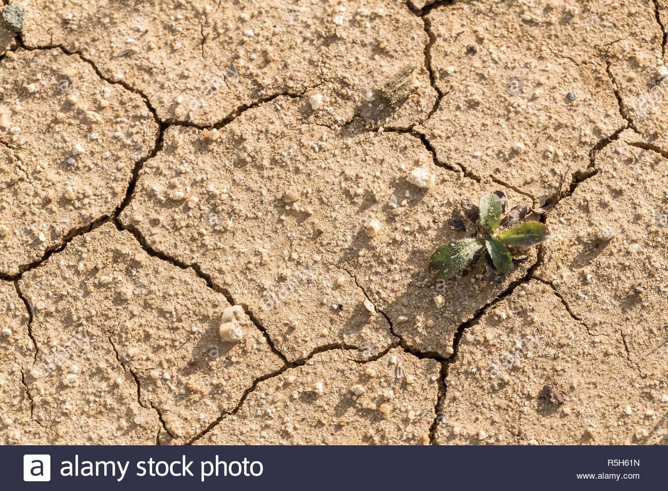 Seca y agrietada del suelo en la zona de cultivo afectadas por la sequía. El centro de Victoria. Imagen De Stock