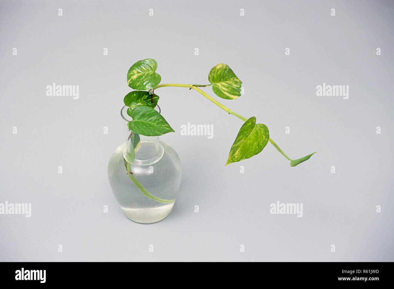 Concepto, Planta de dinero Imagen De Stock