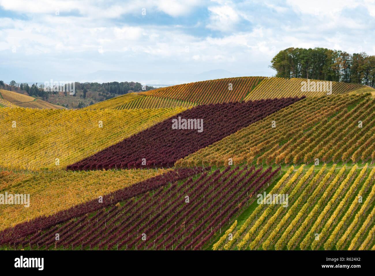 país del vino Foto de stock