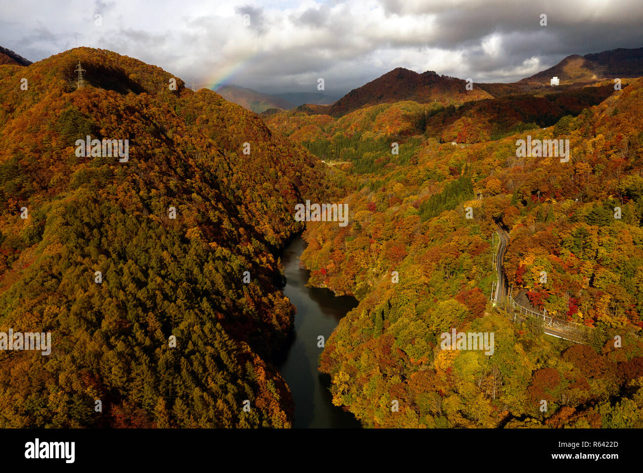 Carretera y un río en otoño del bosque. Paisaje aéreo de temporada de otoño por zumbido. Foto de stock