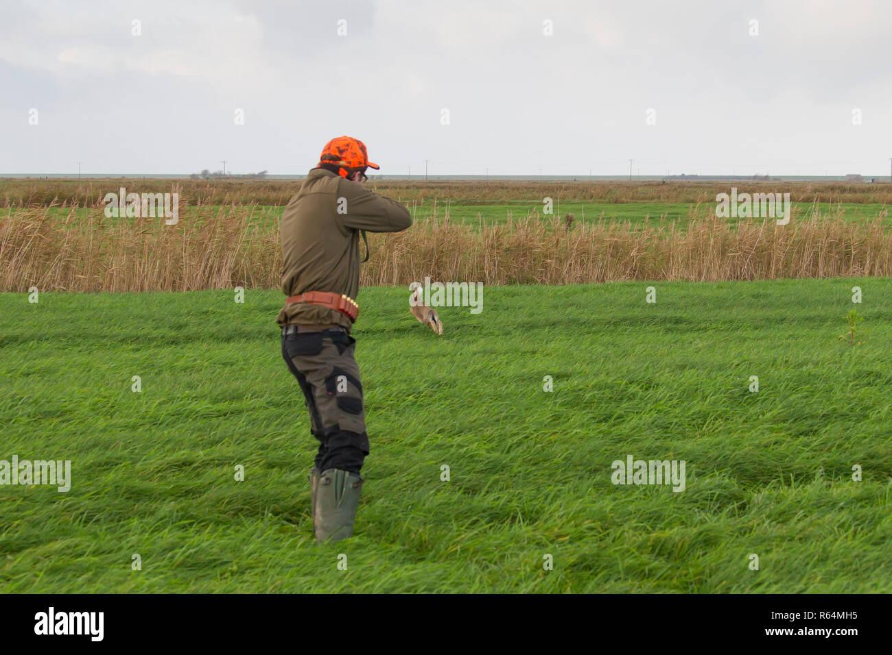 Cazador con rifle huyendo de Brown de la liebre (Lepus europaeus) en los prados durante la temporada de caza en otoño Imagen De Stock