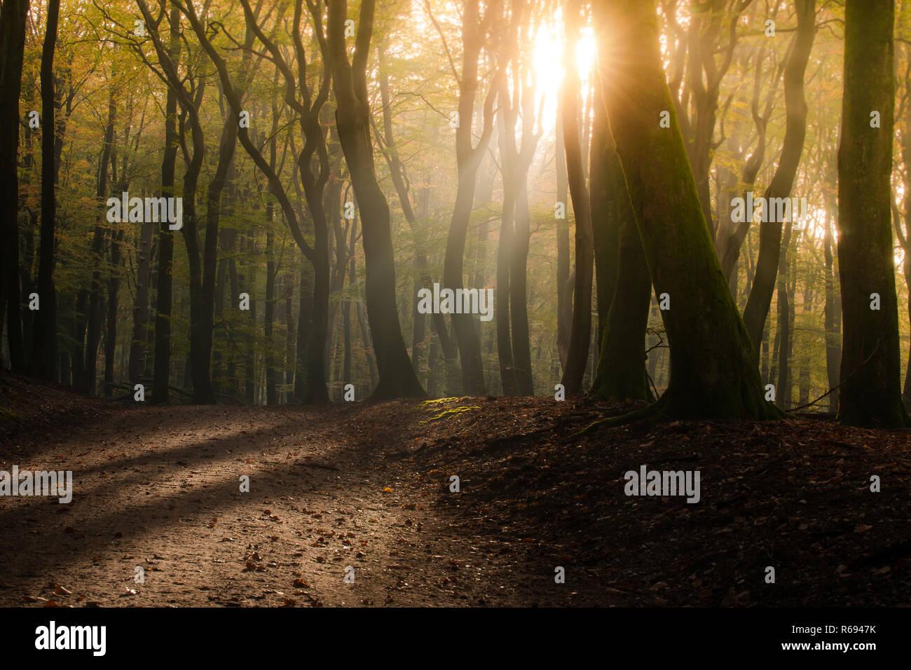 c3fb13a2e La  Dancing Speulderbos  árboles Speulder Sprielderbos- y uno de los más  antiguos y