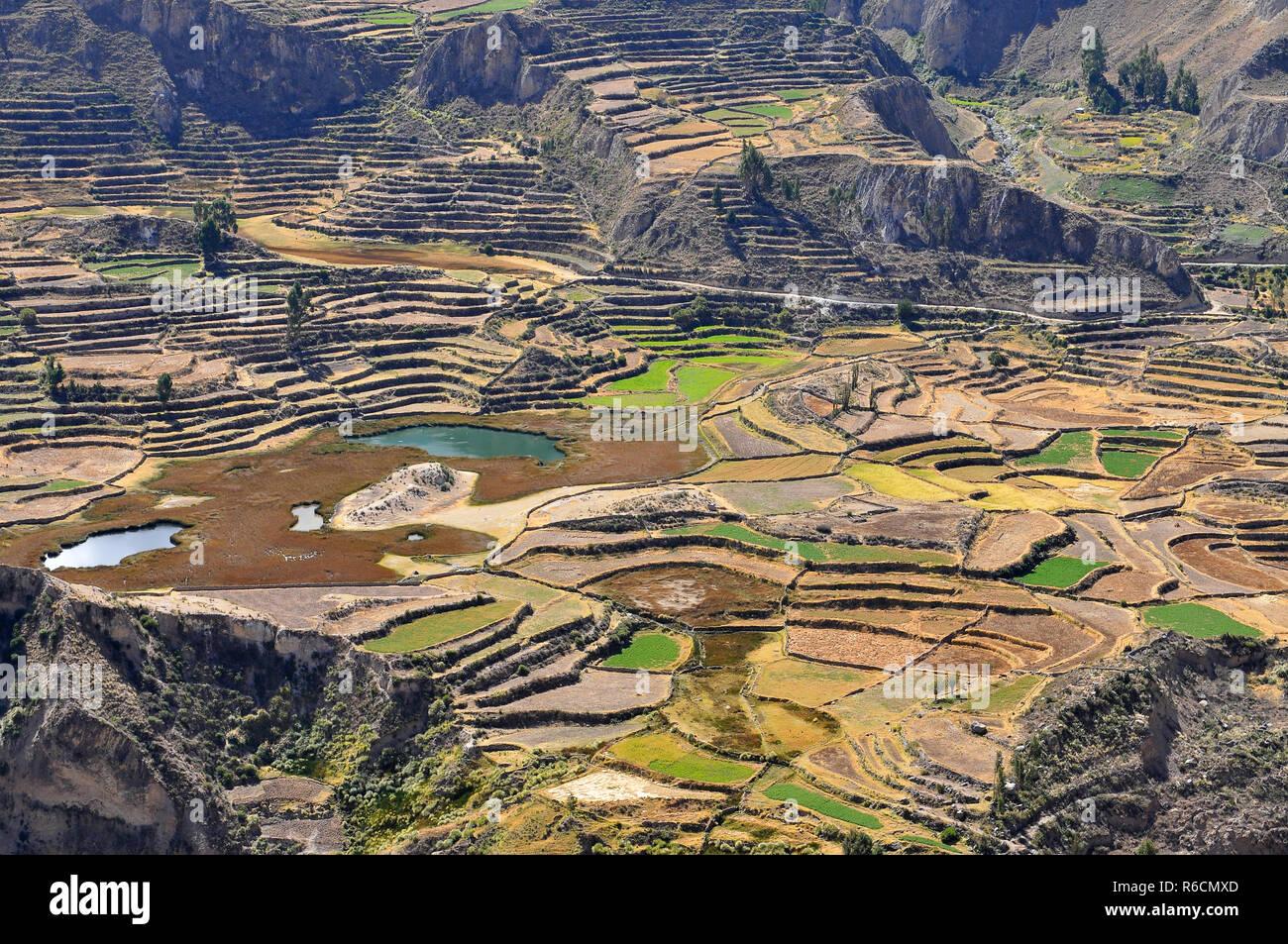 Perú El Valle Del Colca Cultivos En Terraza Foto Imagen