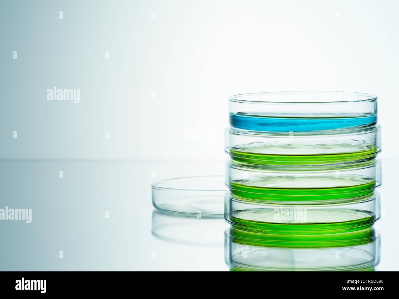 El azul y el verde líquidos en placas petri, fondo liso Foto de stock