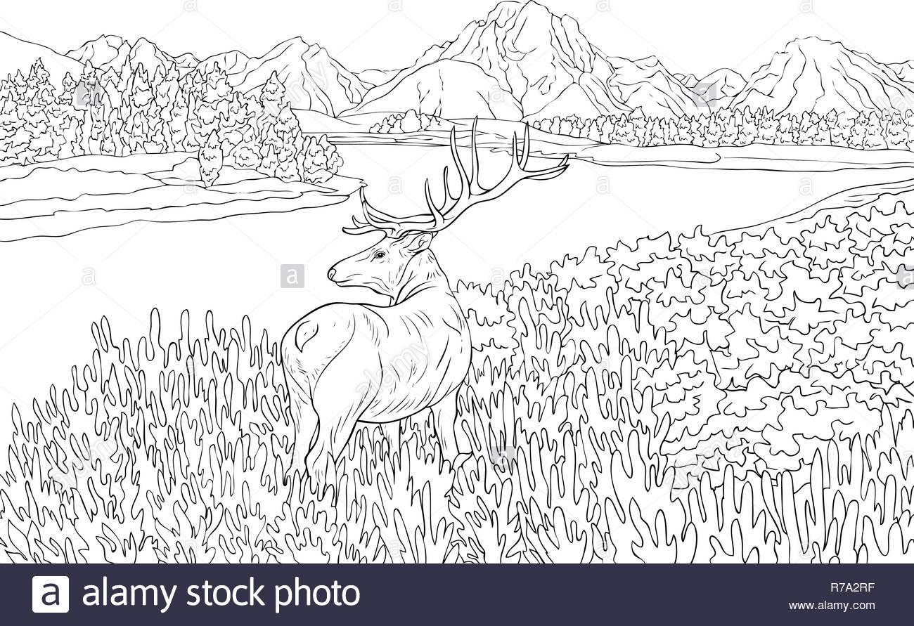 La Naturaleza Del Paisaje Con Un Ciervo Montañas Lago Y