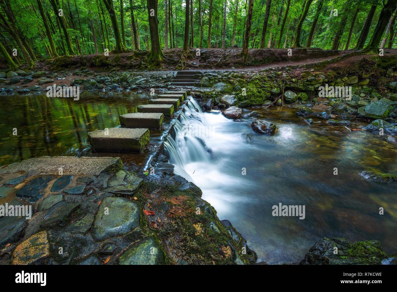 Camino de tierra en el Parque Forestal de Tollymore Foto de stock