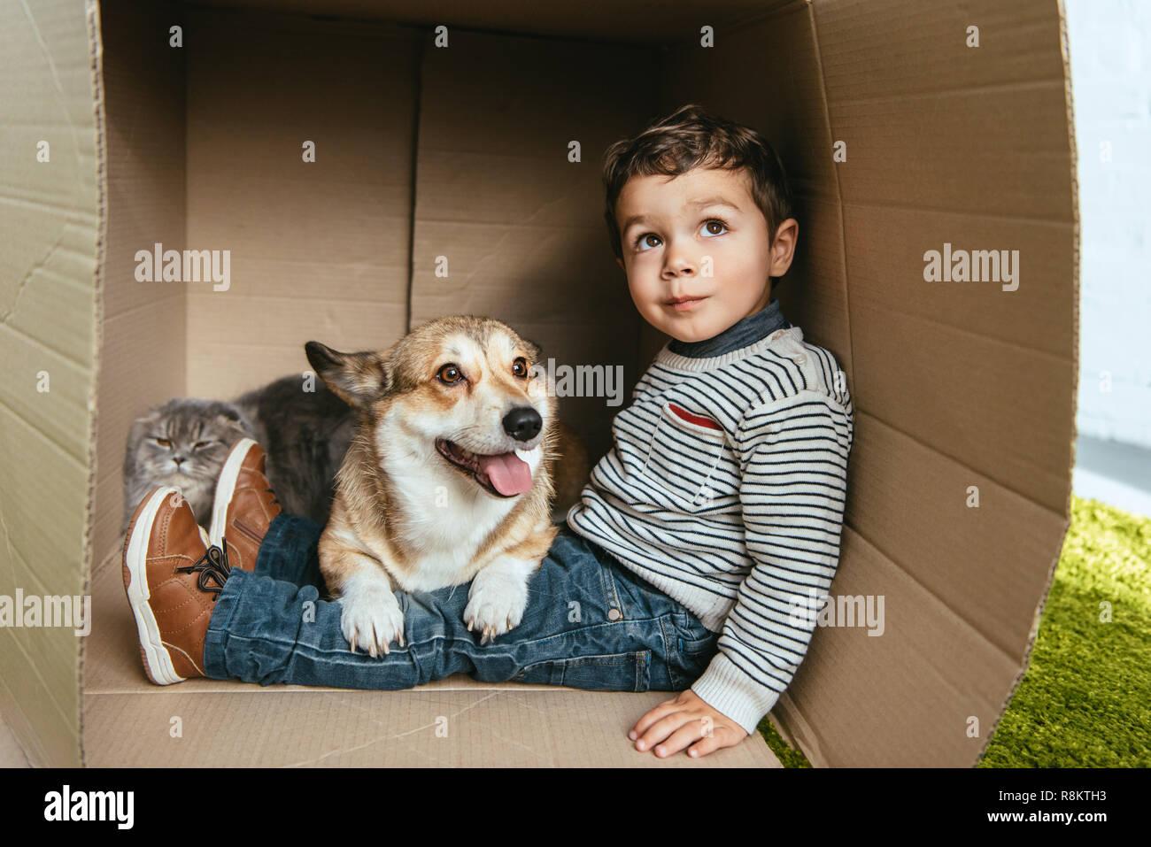 El enfoque selectivo de chico con adorables corgi y british longhair gato sentado en caja de cartón Foto de stock