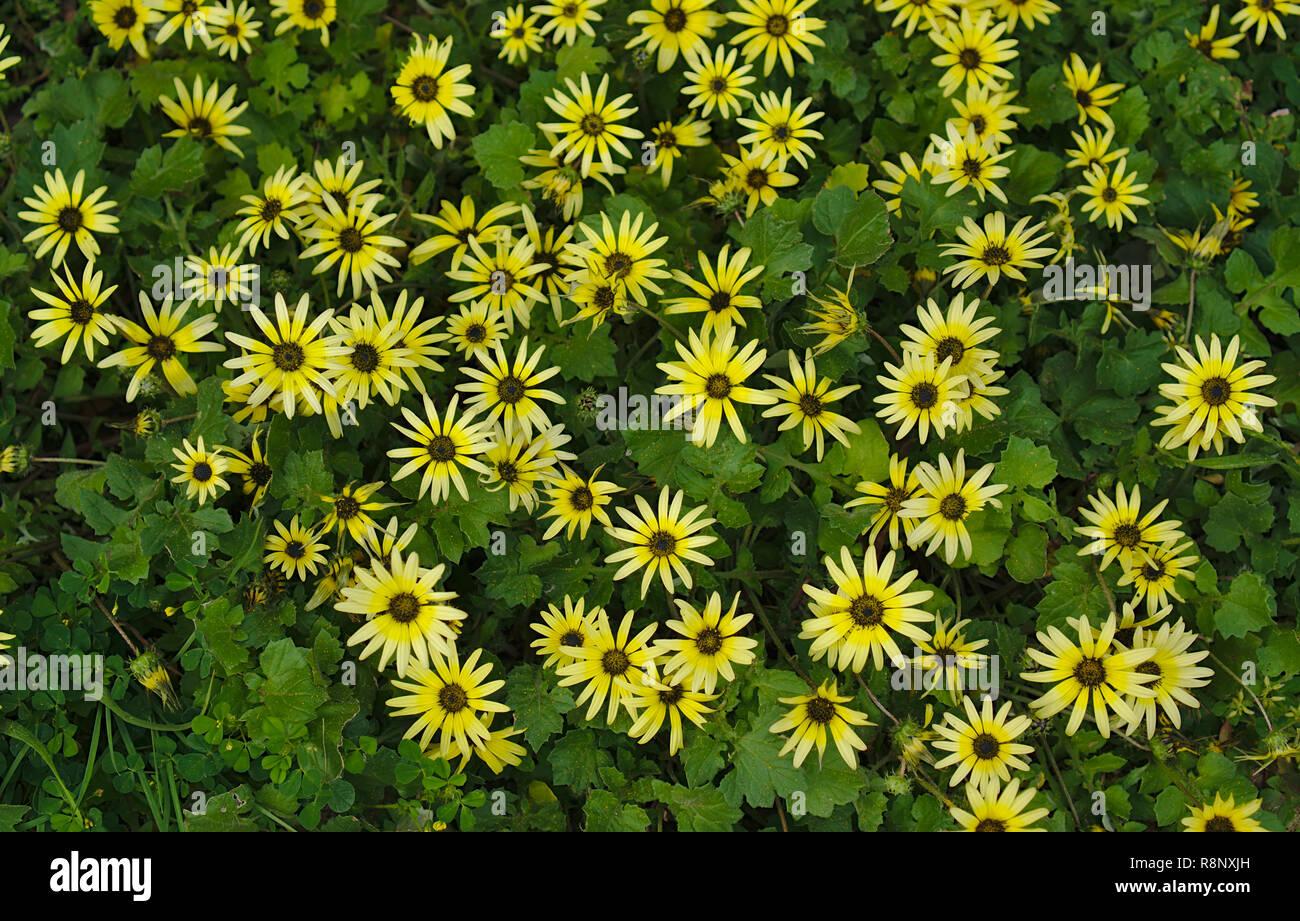 Flores Amarillas Silvestres Imagenes De Stock Flores Amarillas