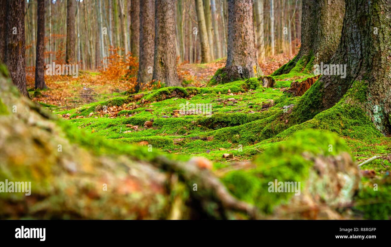 El piso del bosque de musgo Imagen De Stock