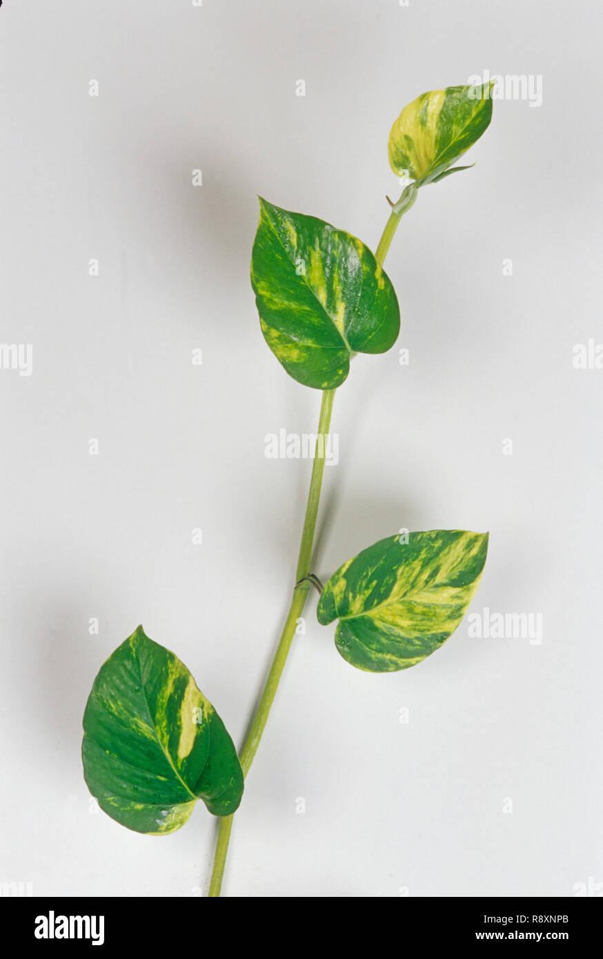 Concepto, Dinero Planta con botella verde Imagen De Stock