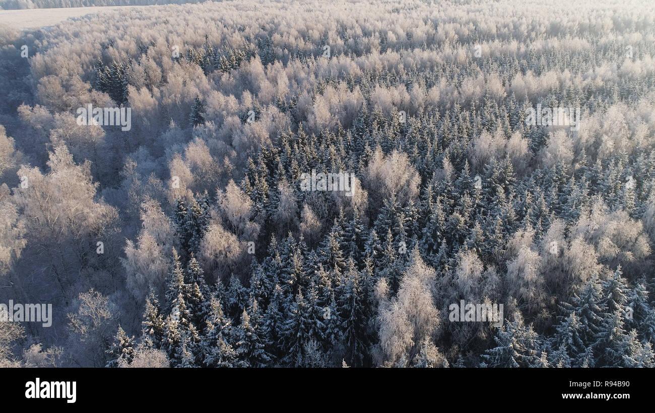 Vista aérea del paisaje invernal bosque cubierto de nieve, escarcha. Ramas congelado con escarcha en invierno bosque en día soleado Foto de stock