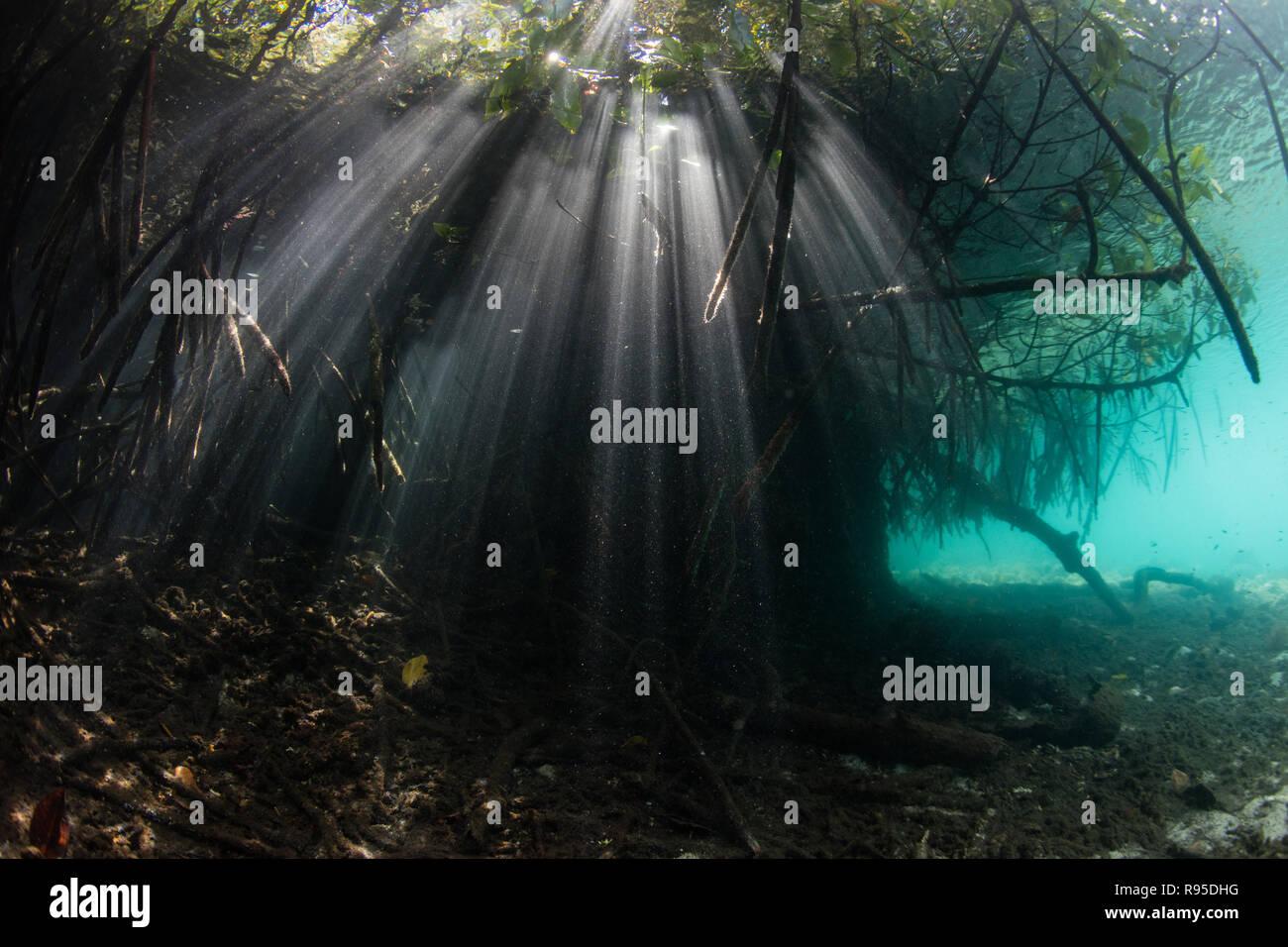 La luz del sol brilla en el agua azul de las sombras de un bosque de manglar en Raja Ampat, Indonesia. Imagen De Stock