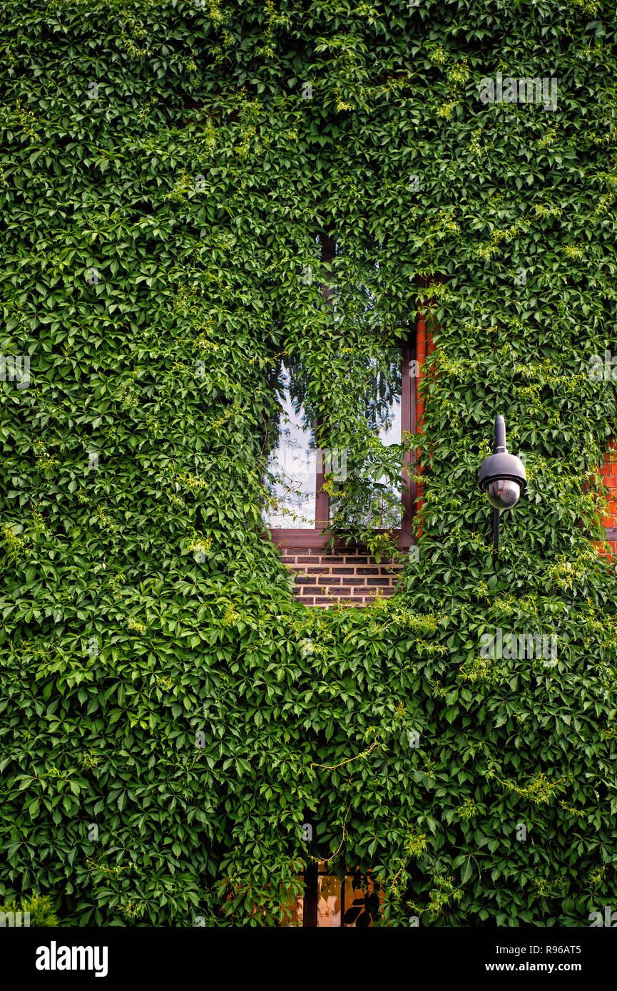 Cristal y luz con la planta verde en la pared de la casa en Wroclaw, Polonia. La arquitectura, el diseño, el estilo. Concepto de jardinería vertical Foto de stock
