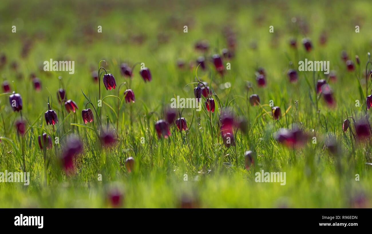 Paisaje de little fairy Foto de stock