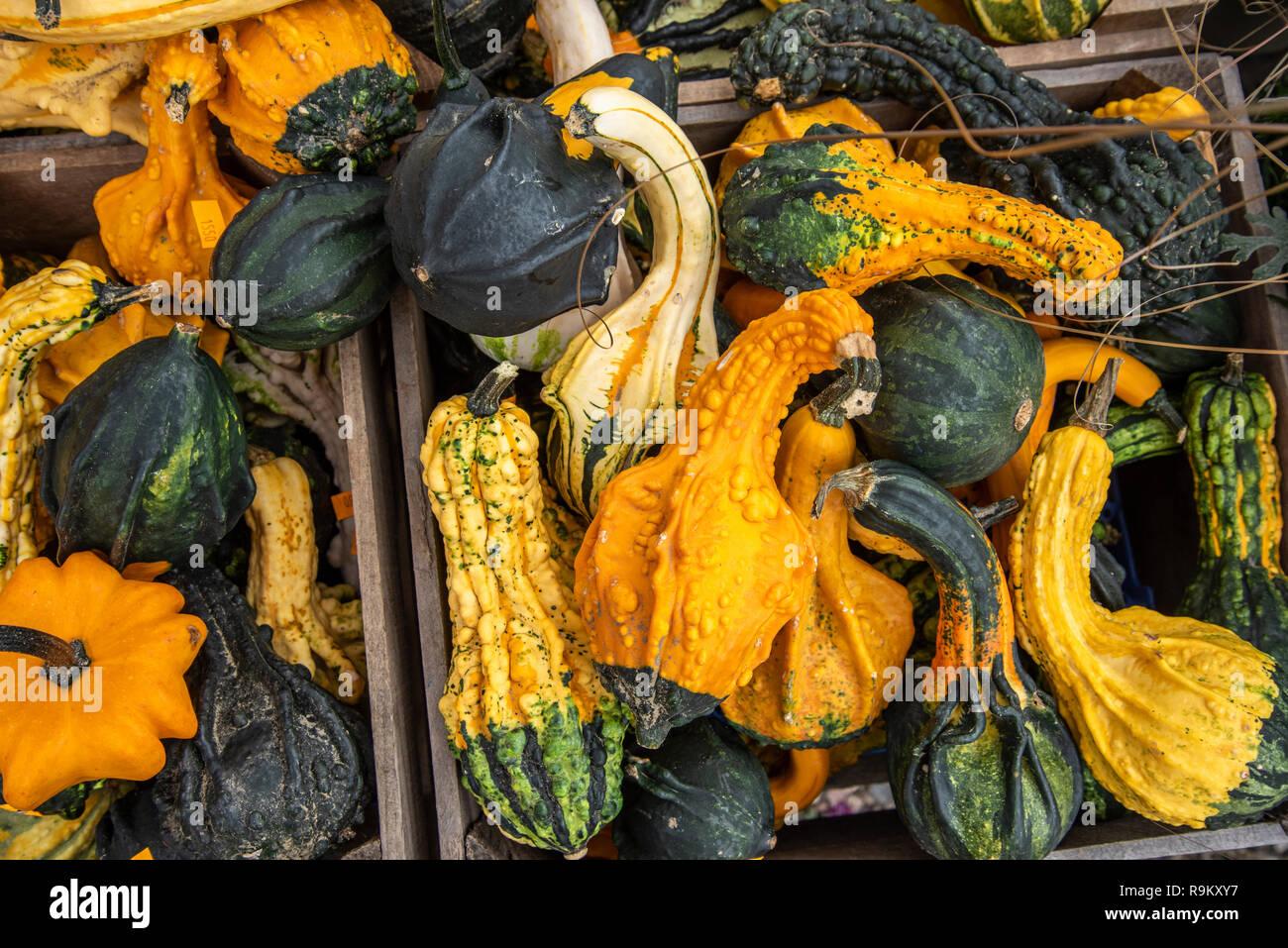 Caída squash mostrada en el mercado al aire libre, Vermont Imagen De Stock