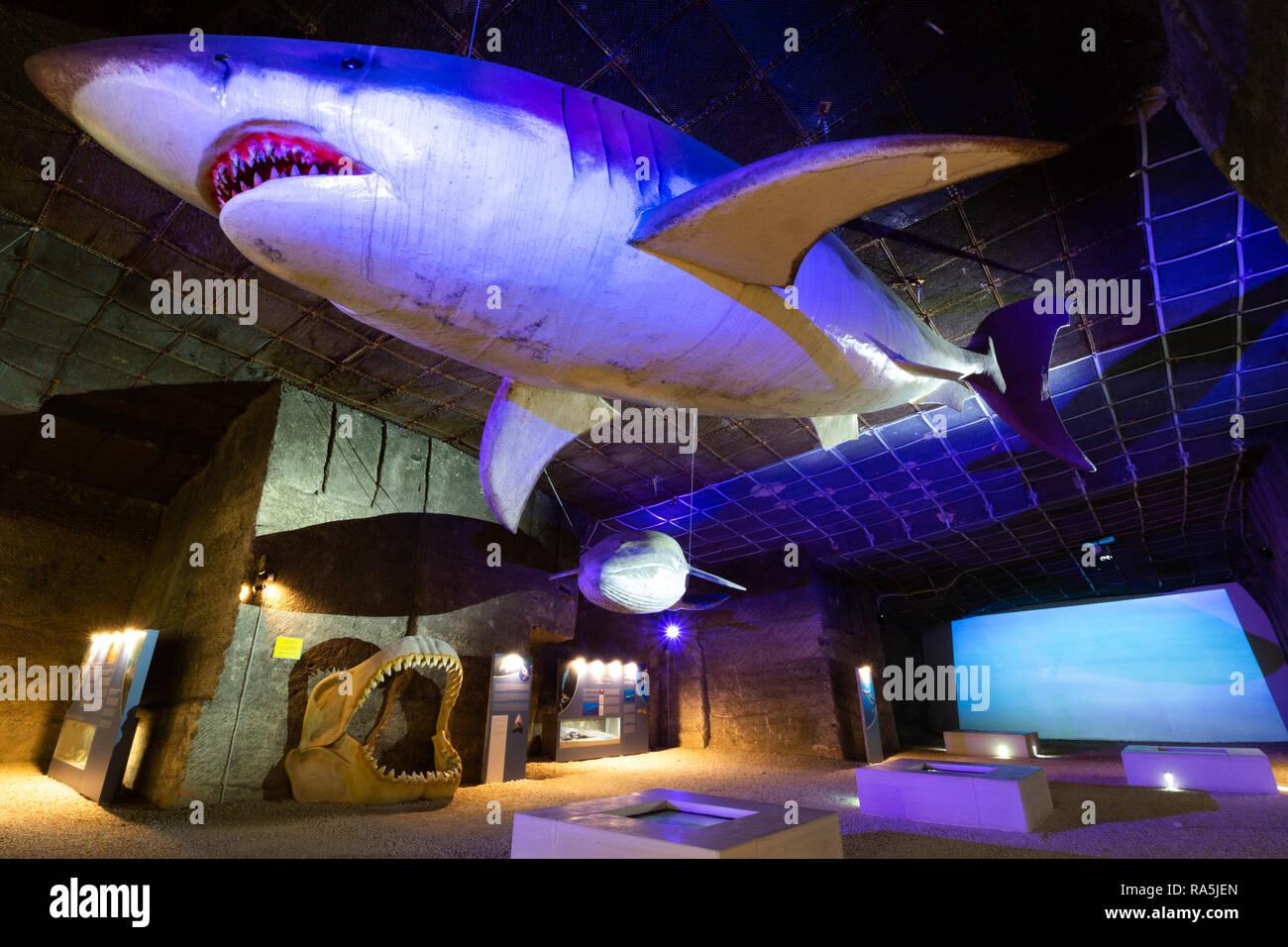 """El llamado """"Parque Temático"""" exposición en la cantera de piedra caliza en la cueva Fertorakos, Hungría. Una vida-tamaño Megalodon Megalodon y mandíbulas. Imagen De Stock"""