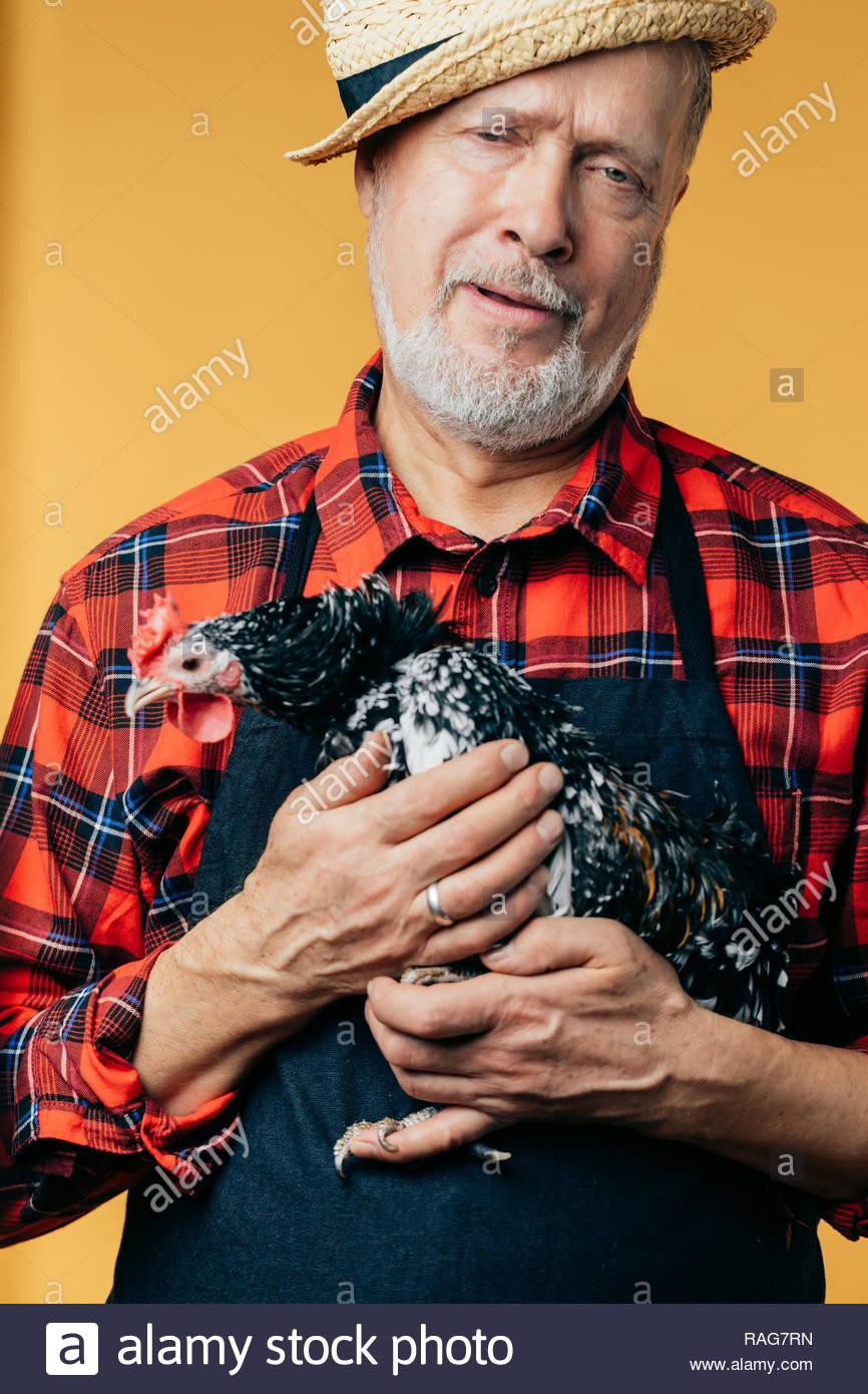Triste infeliz hombre es la celebración de gallina traumatizada. Wha't, una lástima. Imagen De Stock