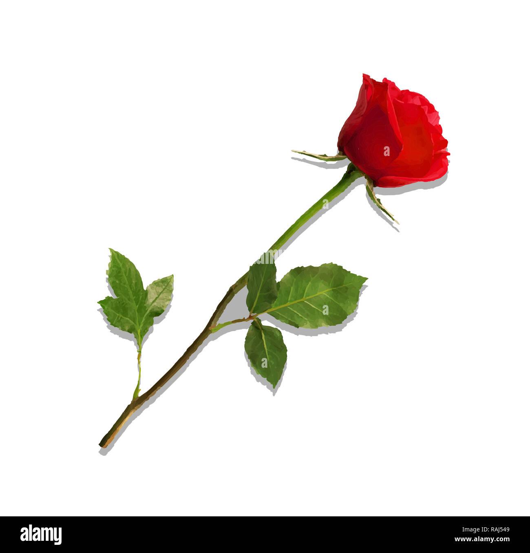 Ilustración de foto-realistas y muy detallado de la flor rosa roja aislado sobre fondo blanco. Hermoso capullo de rosa roja de tallo largo. Imágenes prediseñadas para Imagen De Stock