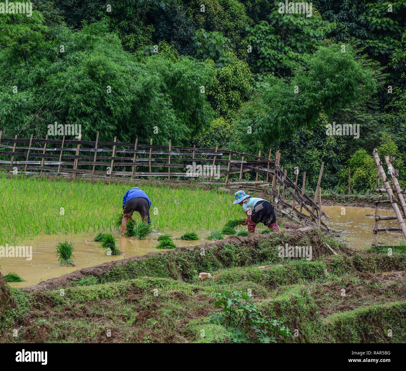 Alta Calidad Royalty Free Stock Image De Agricultores Que