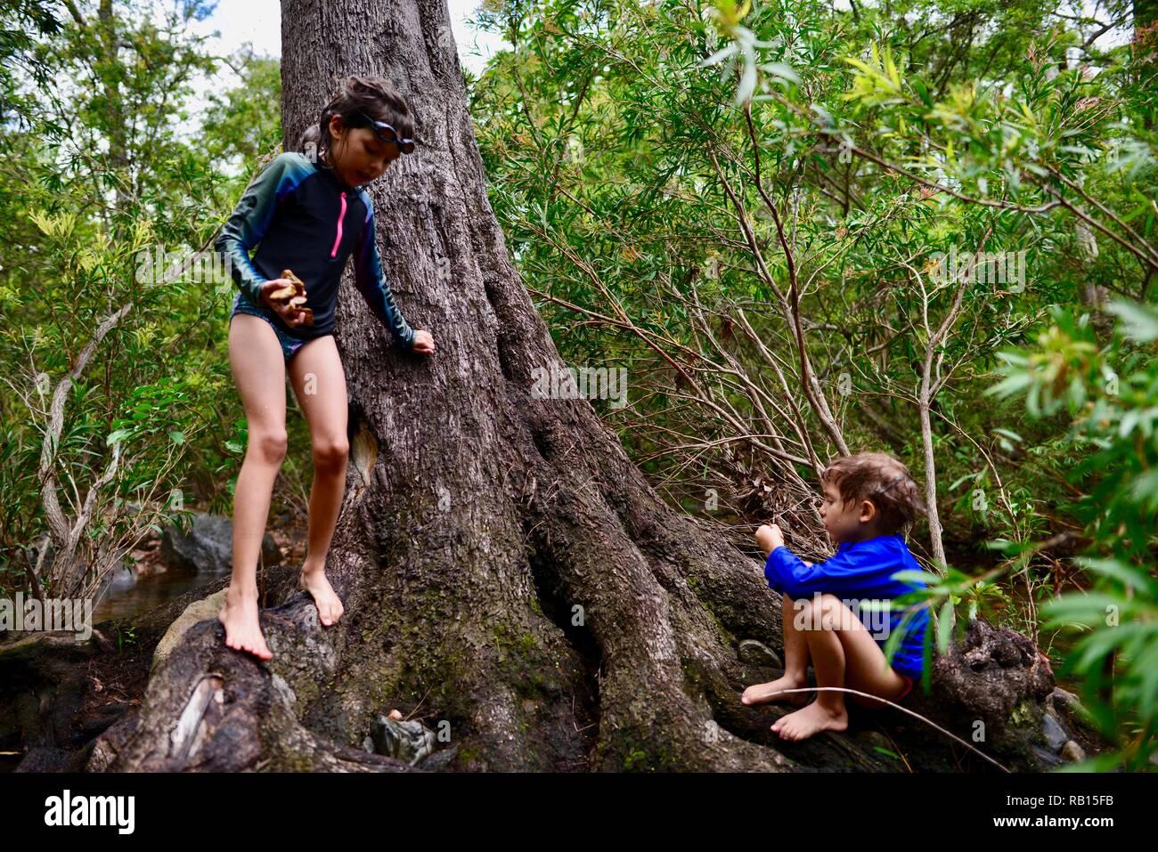 Niños jugando en un árbol cerca de un arroyo, una familia de nadar en un arroyo, Alligator Creek, Townsville, Queensland, Australia Foto de stock