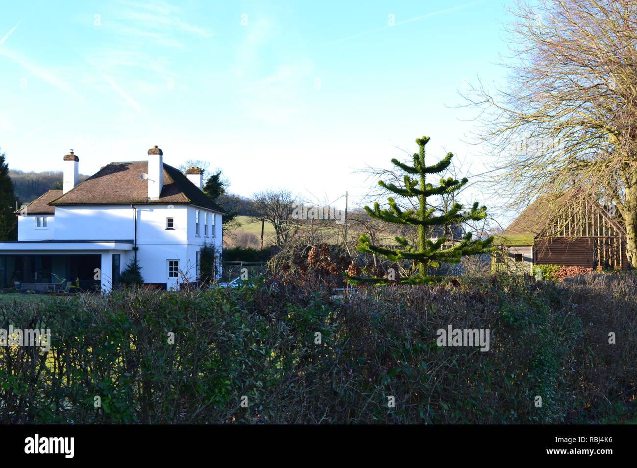 Una casa grande con araucaria y una elegante extensión en una aldea rural llamada Austin Lodge en Kent, cerca de Eynsford y Shoreham. Invierno Foto de stock
