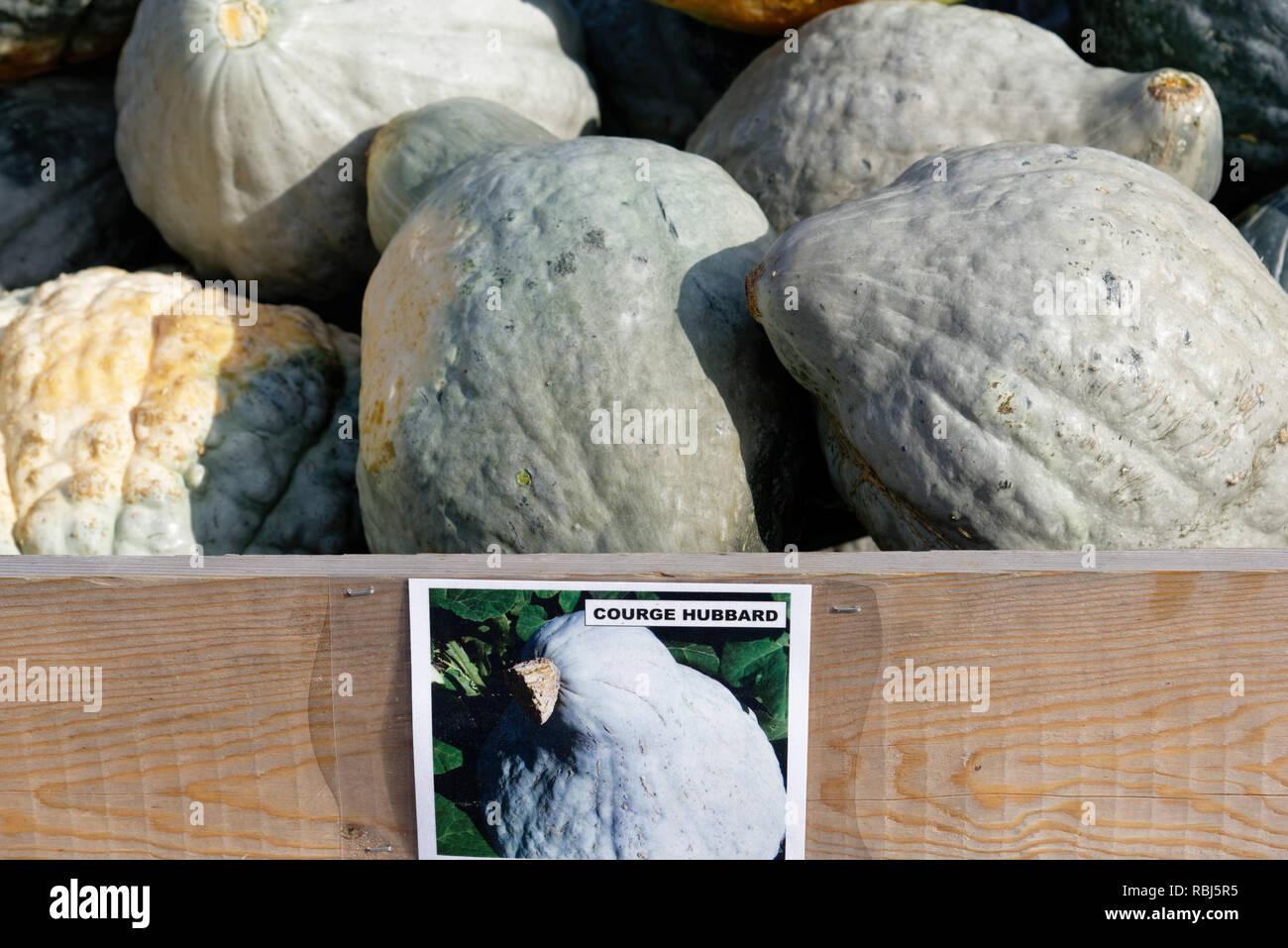 Una caja conteniendo Hubbard squash para la venta en una granja de Quebec Imagen De Stock