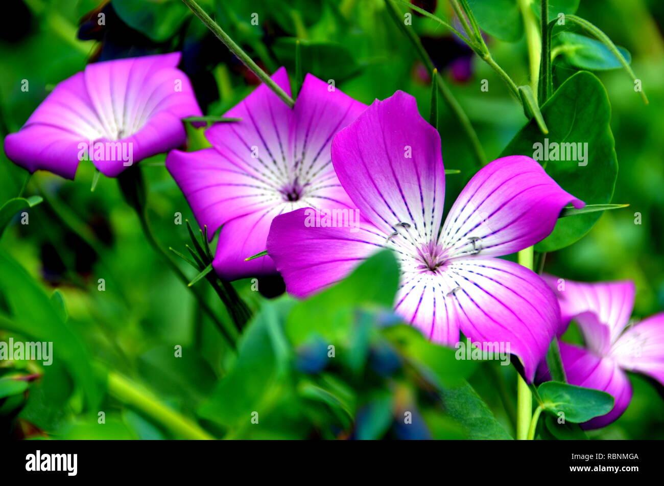 Flores en el jardín Imagen De Stock