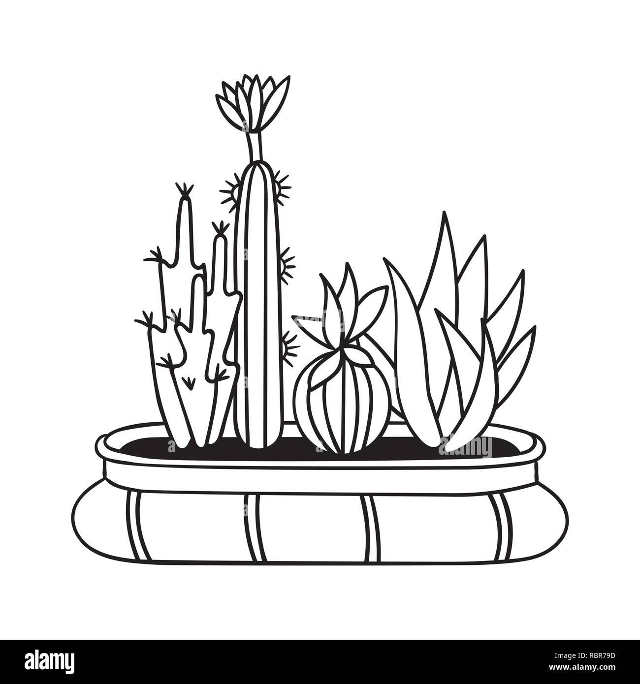 Cactus Para Libros De Colorear Ilustración Vectorial