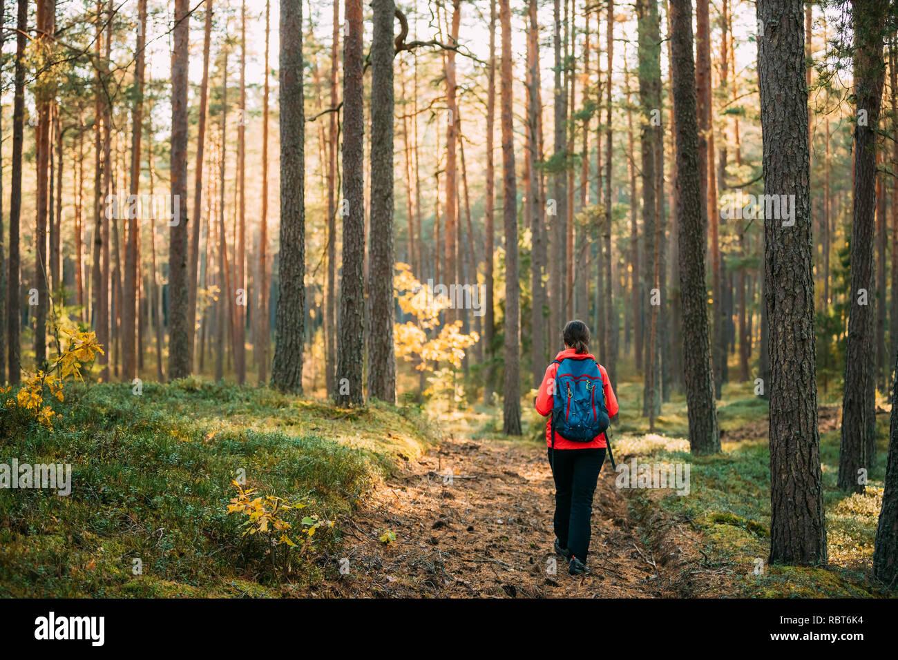 Active adulto joven mujer caucásica Backpacker caminar en otoño Bosque verde. Un estilo de vida activo en el otoño de la edad de la naturaleza durante la puesta de sol. Foto de stock