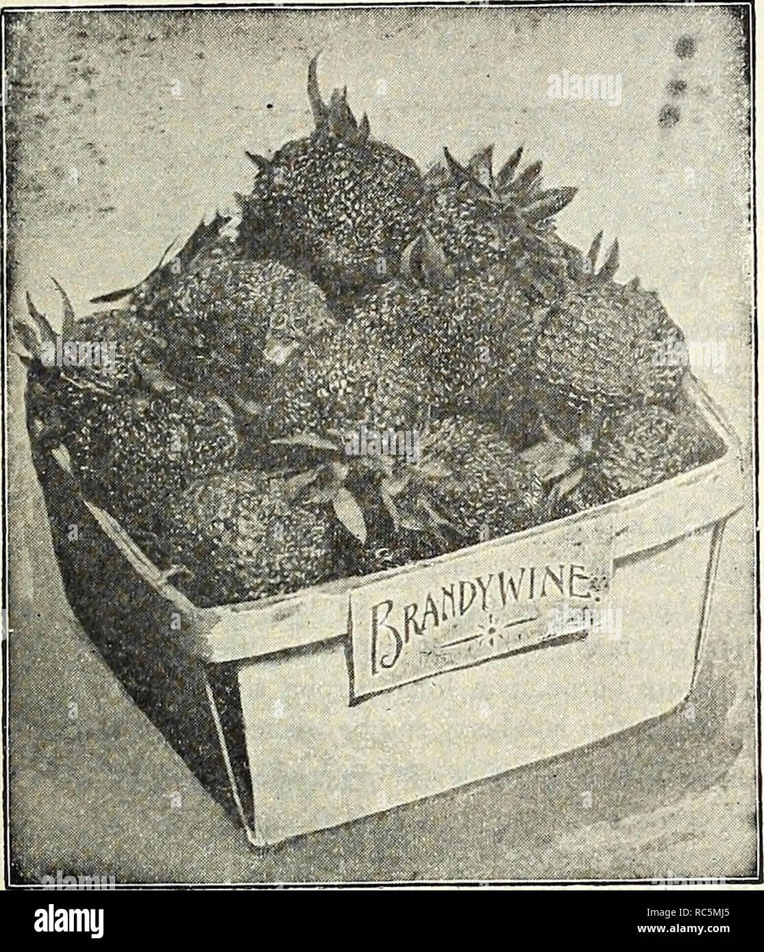 72338501a . Dreer de mediados del catálogo de verano 1908. Los catálogos de semillas  de flores