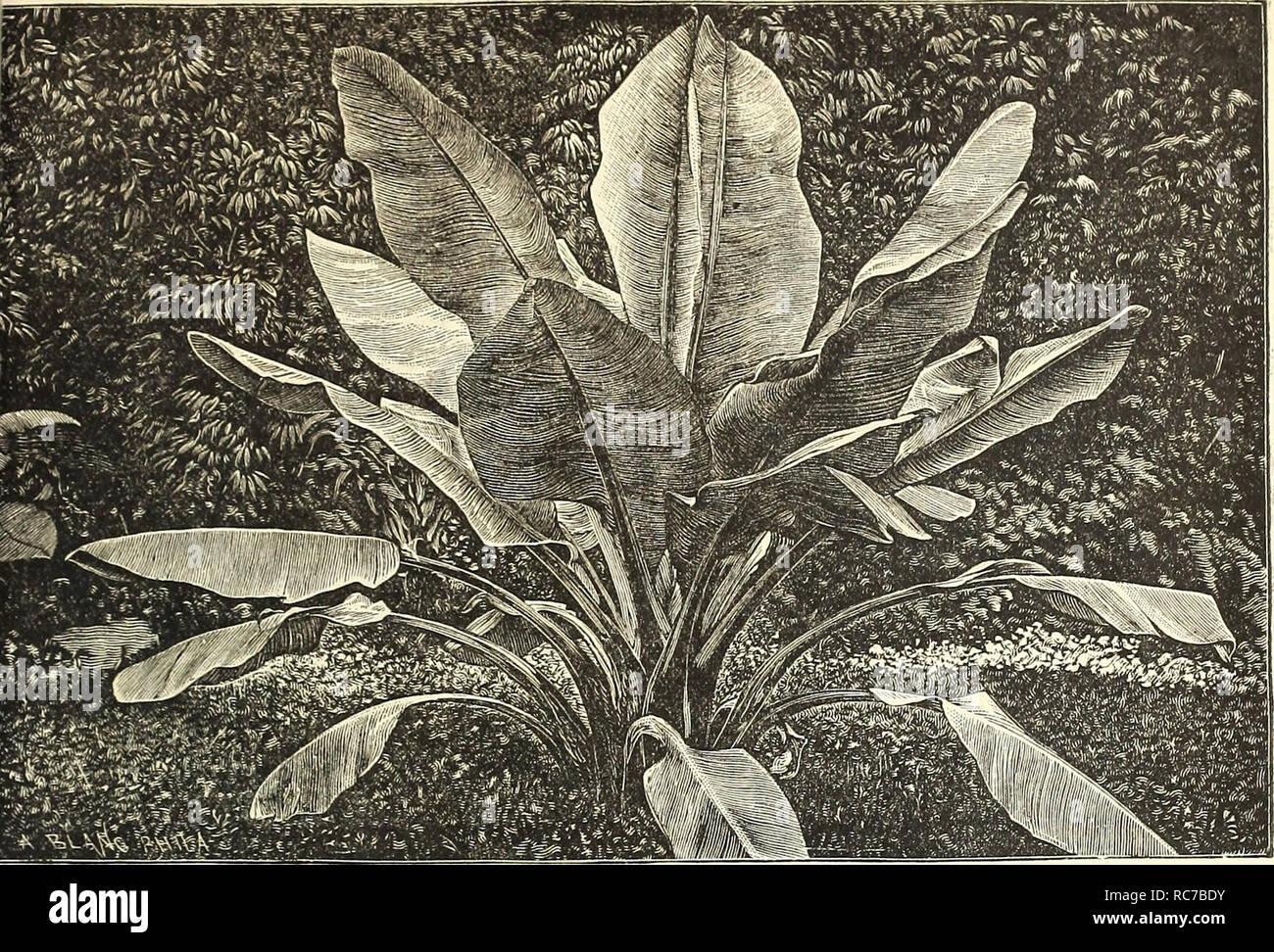Dreer S Garden De Calendario Para 1887 Los Catálogos De