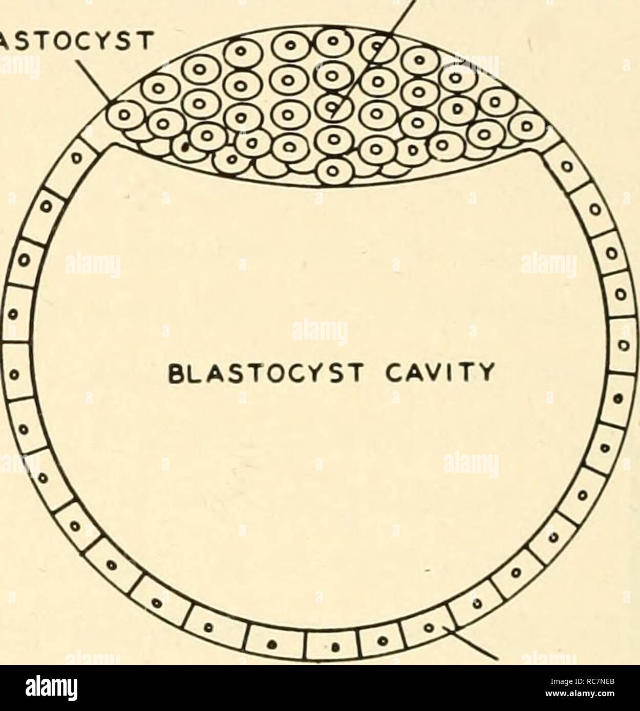 Embriología Embriología Embriología Genealogía G La Masa