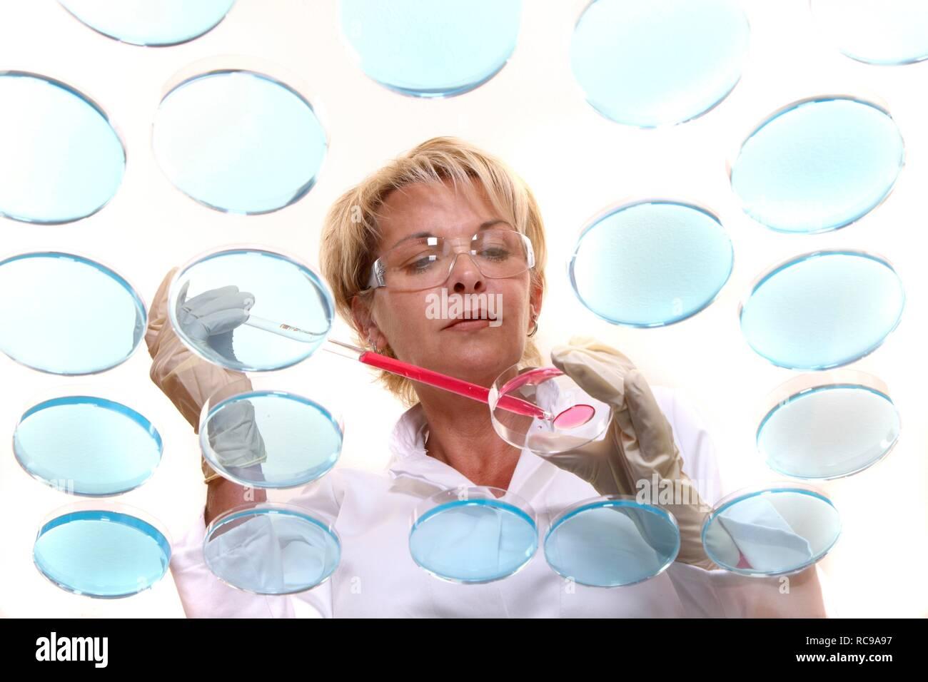 Técnico de laboratorio que trabajan con cultivos de bacterias en placas de petri en el laboratorio Imagen De Stock