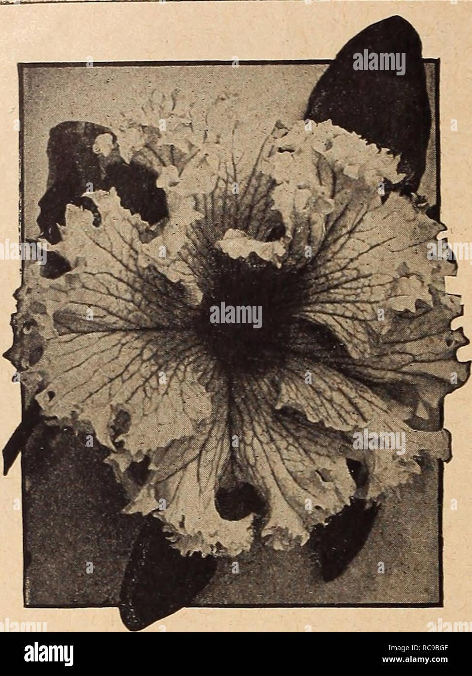 Dreer S Garden Book 1920 Los Catálogos De Semillas Los