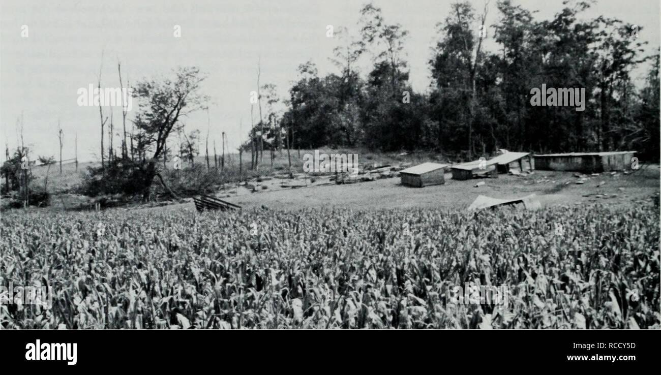 . Distribución, hábitat, y llamando a la temporada del Coro de Illinois (Pseudacris streckeri rana illinoensis) a lo largo del bajo Río de Illinois. Las ranas. Illinois Natural History Survey notas biológicas nº 132. Figura 4. Modificación del hábitat debido a la elevación de cerdo sobre una cresta de arena en Scott County, Illinois. Observe que el Hog pen se de- nuded de vegetación. Los árboles muertos en la zona adyacente a la pluma probablemente fueron asesinados anteriormente por los cerdos. El nivel de suelo fértil, (con más de arcilla, limo, materia orgánica y/o) en el primer plano se plantó en maíz. Illinois coro de ranas {Pseudacru streckeri illinoensis) fueron Foto de stock