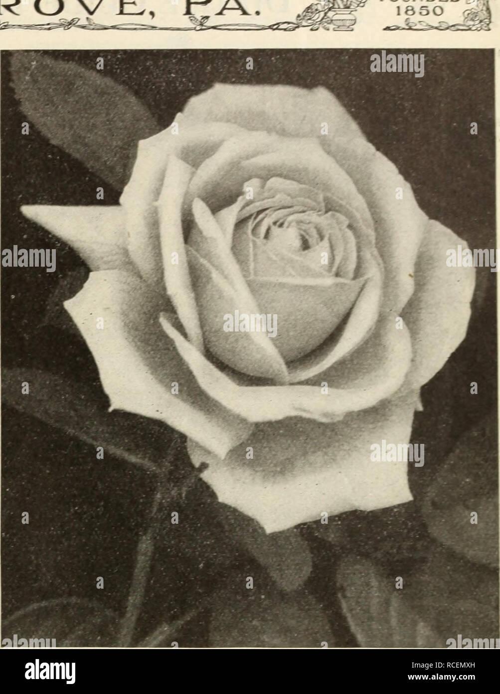 Dingee Guía Para El Cultivo De Rosas Desde Hace Más De 60 Años Una