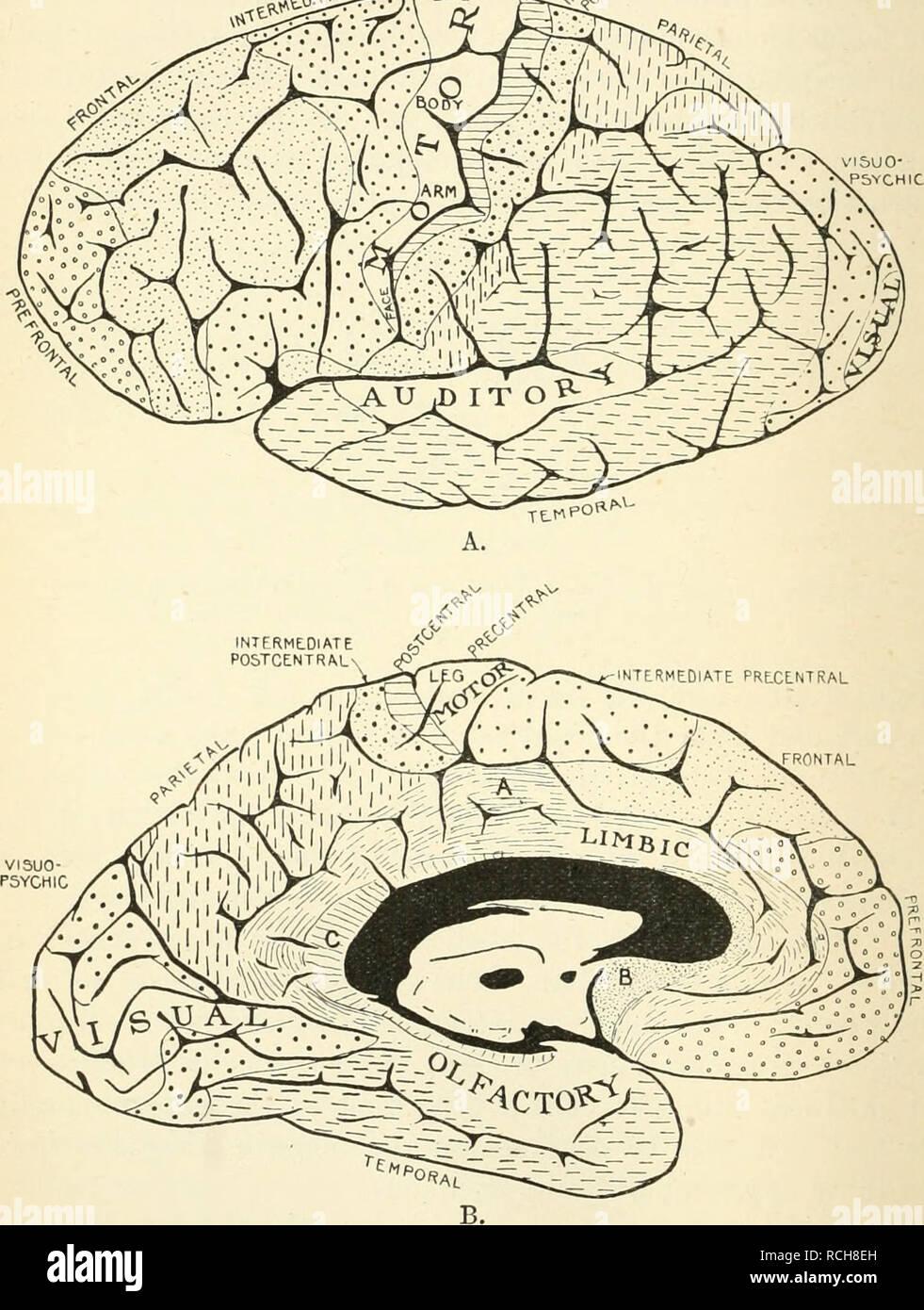 Elementos De Fisiología Humana Fisiología 662 Fisiología