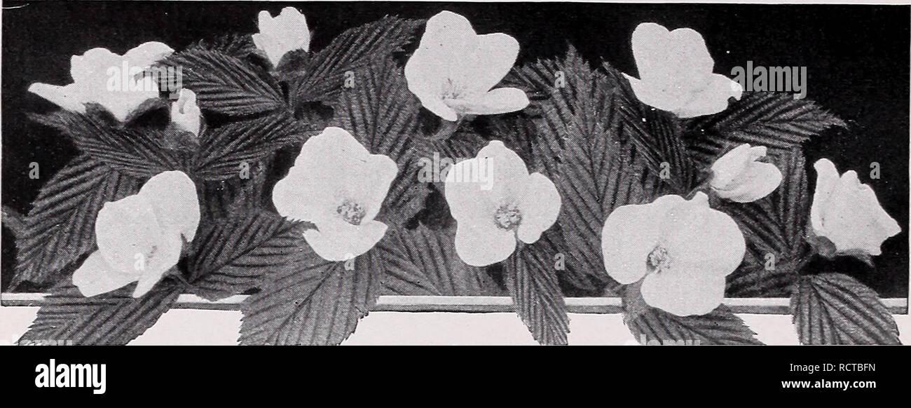 flores hierba haz de 35 cm ordena Boltze arte plantas /& 1 unidades