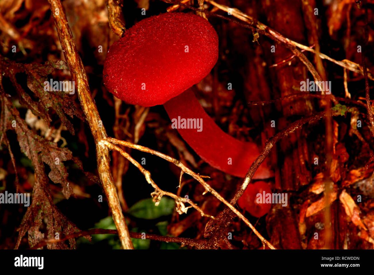 Seta roja Imagen De Stock