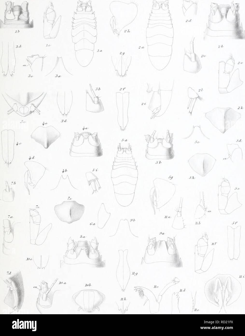 . Ingolf danés-expedición. Los animales marinos -- las regiones árticas; expediciones científicas; las regiones árticas. //I///' Expedición III 4 II - I Ihmxrii Crustacea MaHacostmca III I'l mil..l'rons Euryoope nodif n..rp 2'. E.inermis ji.sp. SE.Jfiznseni oiiiin. ^.H.convpla-nata n,mn. 5.UbrevirostTis n.sp (i.E.prodifcta S.O.S. ZE.-parva n<mn. 8. E pTvaZUcngiwm &0.S 9.S.iiwcata G.O.S lO.U.Ttvwtic-G.O.S. TIJJLansen â¢// U.Piirpx-es.WUer TJf oceartiea Taa.. Por favor tenga en cuenta que estas imágenes son extraídas de la página escaneada imágenes que podrían haber sido mejoradas digitalmente para la legibilidad - colo Foto de stock