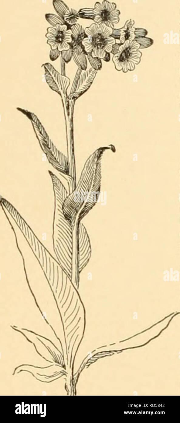 Cyclopedia Of American Horticultura Compuesto De